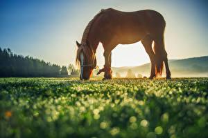 Картинка Луга Лошади Животные