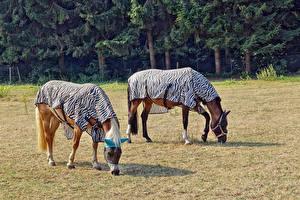 Обои Лошадь Двое Животные