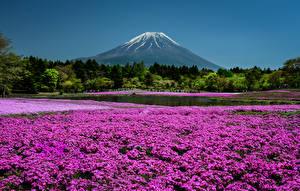 Фото Япония Киото Парки Флоксы Горы Пруд Природа