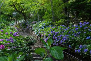 Фотография Япония Парки Гортензия Лестница Nara Природа