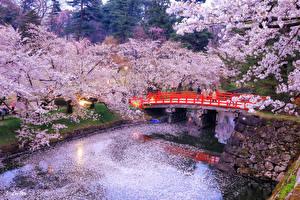 Картинки Япония Токио Парки Цветущие деревья Речка Мосты Вечер Природа