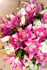 Картинки Лилия Вблизи Цветы