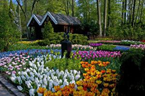 Фотографии Нидерланды Парки Дома Тюльпаны Нарциссы Скульптуры Дизайн Keukenhof Природа