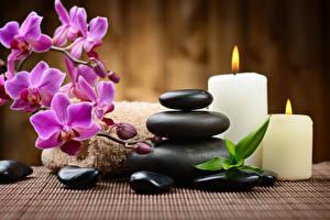 Обои Орхидеи Камень Свечи Физиотерапия Цветы