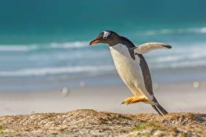 Фотография Пингвины Прыжок Gentoo Животные