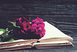 Фотографии Пионы Книга Бордовый Цветы