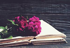 Фотографии Пионы Книга Бордовая
