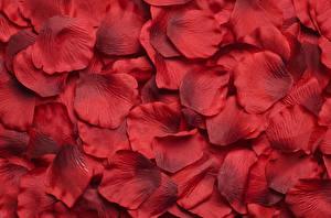 Картинка Розы Текстура Лепестки Красный цветок