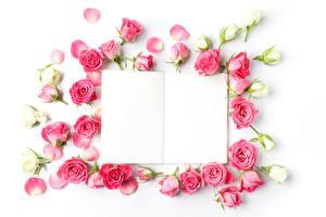 Картинки Розы Белый фон Шаблон поздравительной открытки Цветы