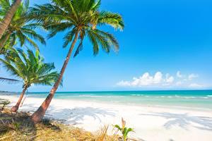 Обои Море Тропики Пальмы Природа