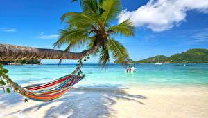 Картинка Море Тропики Пальмы Гамак Ствол дерева Природа