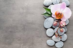 Фото Камни Орхидеи
