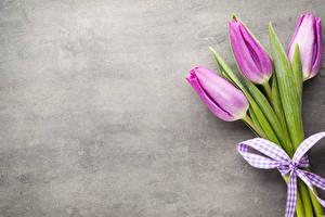 Фотография Тюльпан Трое 3 Бант Цветы