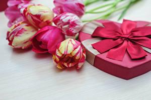 Фото Тюльпаны День всех влюблённых Цветы
