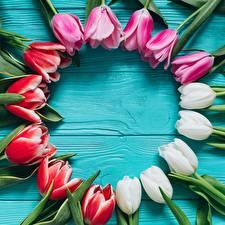 Картинка Тюльпаны Доски