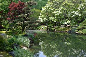 Фотография Штаты Сады Цветущие деревья Пруд Gibbs Gardens