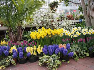 Фотографии США Сады Гиацинты Нарциссы Тюльпаны Hidden Lake Gardens