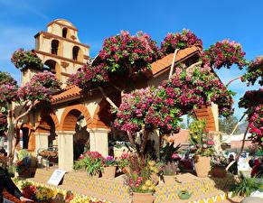 Фотография США Парки Альстрёмерия Тюльпаны Калифорния Дизайн Pasadena Природа