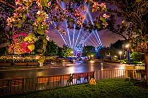 Фото Америка Парки Диснейленд Дороги Калифорния Анахайм Ночные Дизайна Уличные фонари Лучи света Ограда Природа