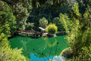 Картинка Штаты Парки Озеро Пирсы Флорида Кусты Cedar Lakes Woods and Gardens