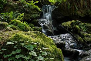 Фотография США Парки Водопады Калифорния Мох Trillium Falls Hike Redwood National Park Природа