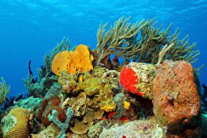 Картинка Подводный мир Кораллы Камни Животные