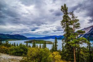 Картинка Аляска Озеро Остров Деревья Tutshi Lake