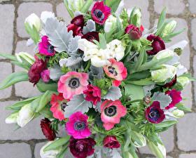 Картинка Букеты Анемоны Тюльпаны Стенка Цветы
