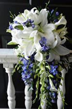 Фото Букеты Лилии цветок