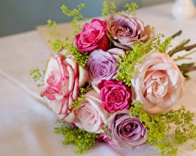 Картинки Букеты Розы Разноцветные