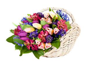 Фотографии Букеты Тюльпан Гиацинты Белом фоне Корзинка Цветы