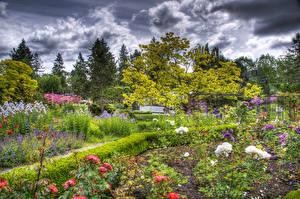 Картинка Канада Сады Розы Ванкувер HDRI Кусты VanDusen Botanical Garden