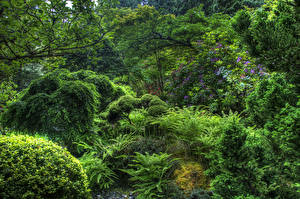Обои Канада Парки Кусты Деревья Butchart Gardens Victoria Природа