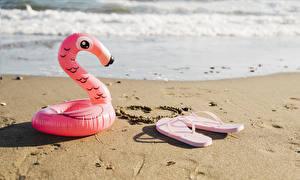 Фотографии Побережье Фламинго Вьетнамки Песок Сердечко