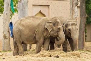 Обои Слон Два животное
