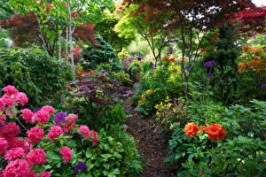 Фотографии Англия Сады Рододендрон Кусты Walsall Garden Природа