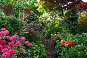 Фотографии Англия Сады Рододендрон Кустов Walsall Garden Природа