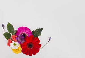 Фото Герберы Розы Шаблон поздравительной открытки Цветы