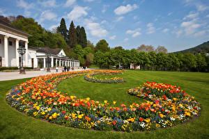 Фото Германия Парки Тюльпаны Газон Baden-Baden Природа