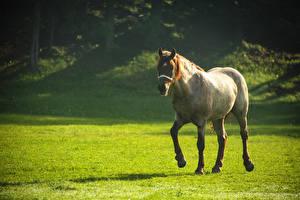 Картинки Лошади Луга Животные