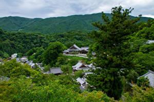 Обои Япония Леса Здания Холмы Ель Nara Природа