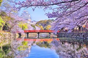 Обои Япония Токио Речка Мосты Весна Цветущие деревья Природа