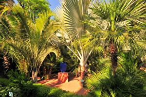 Картинки Марокко Парк Тропики Пальмы Marrakech  Jardin Majorelle Природа