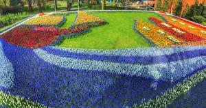 Фотографии Нидерланды Парки Гиацинты Тюльпаны Газон Дизайн Keukenhof Природа