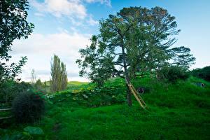 Фото Новая Зеландия Парки Здания Деревья Трава Hobbit House Matamata