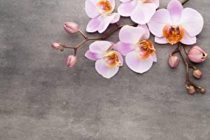 Картинки Орхидеи