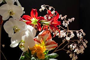 Фотография Орхидеи Амариллис Анютины глазки Черный фон цветок