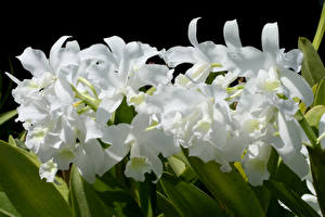 Фотографии Орхидеи Вблизи Белых Цветы