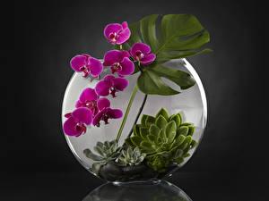 Картинка Орхидеи Дизайн