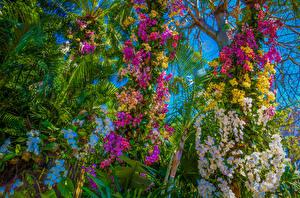 Фотографии Орхидеи Много Пальмы Цветы
